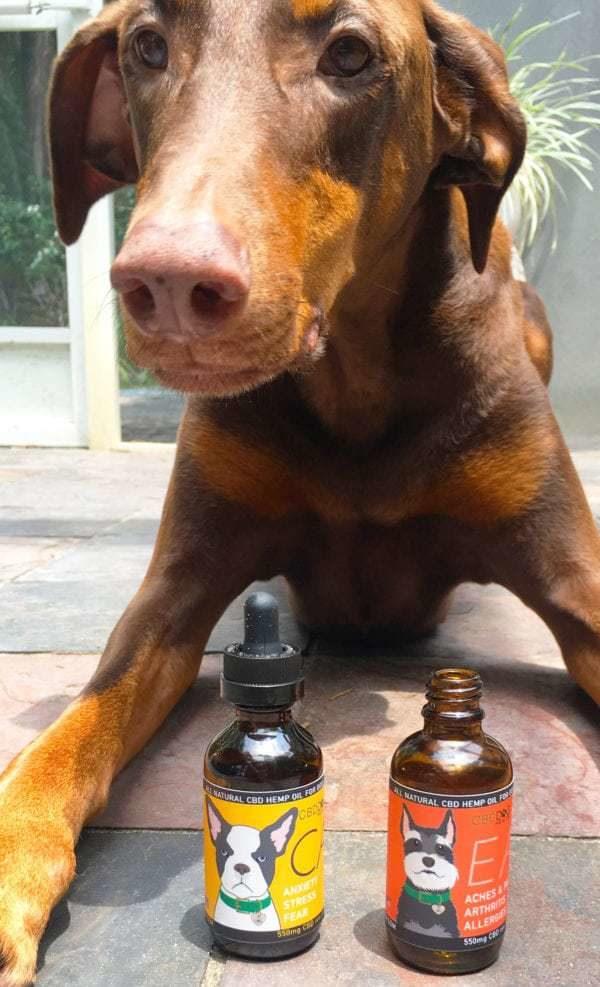 CALM - Full Spectrum Hemp Extract (CBD) for Dogs