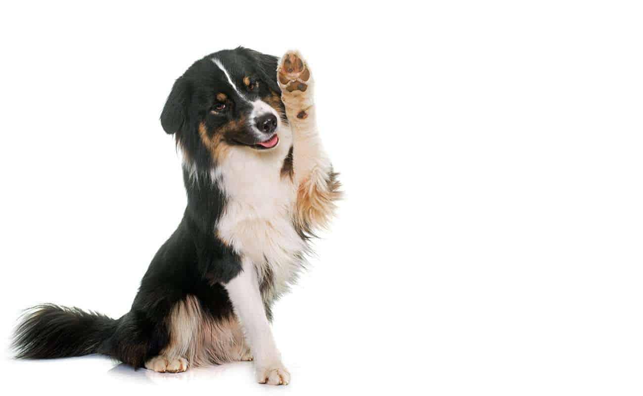 all-natural pet treats