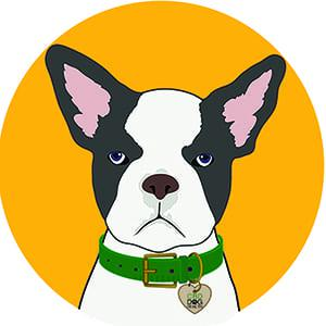 Frenchie dog in yellow circle - Boston Terrier CBD Dog Health