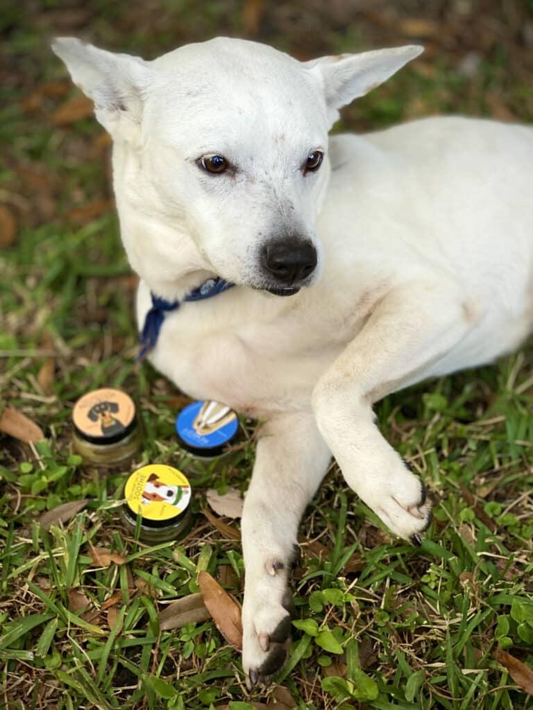 Jolene with CBD Dog Health Salves