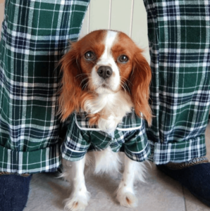 CBD Dog Health Pajamas Gift Guide