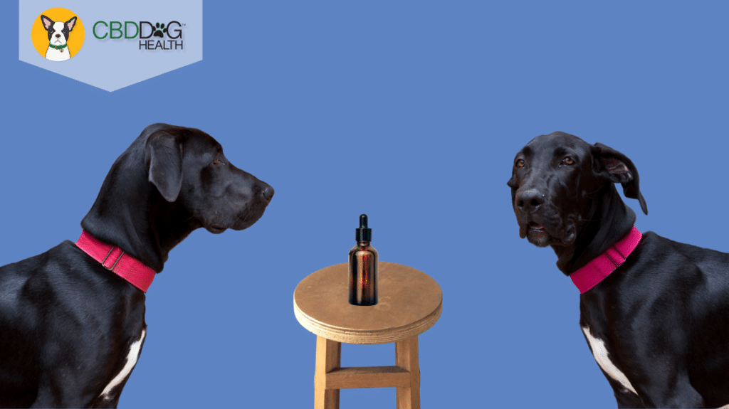 Why Didn't CBD Work For My Pet?
