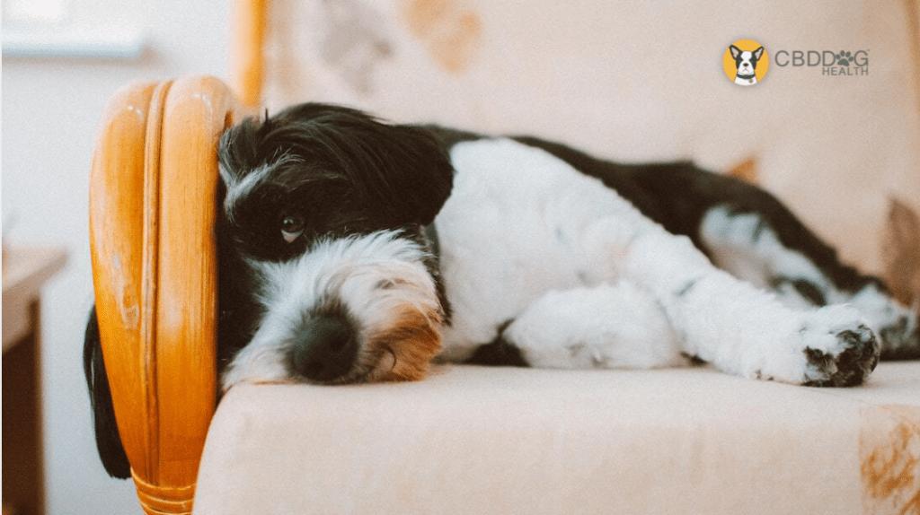 Insomnia in dogs