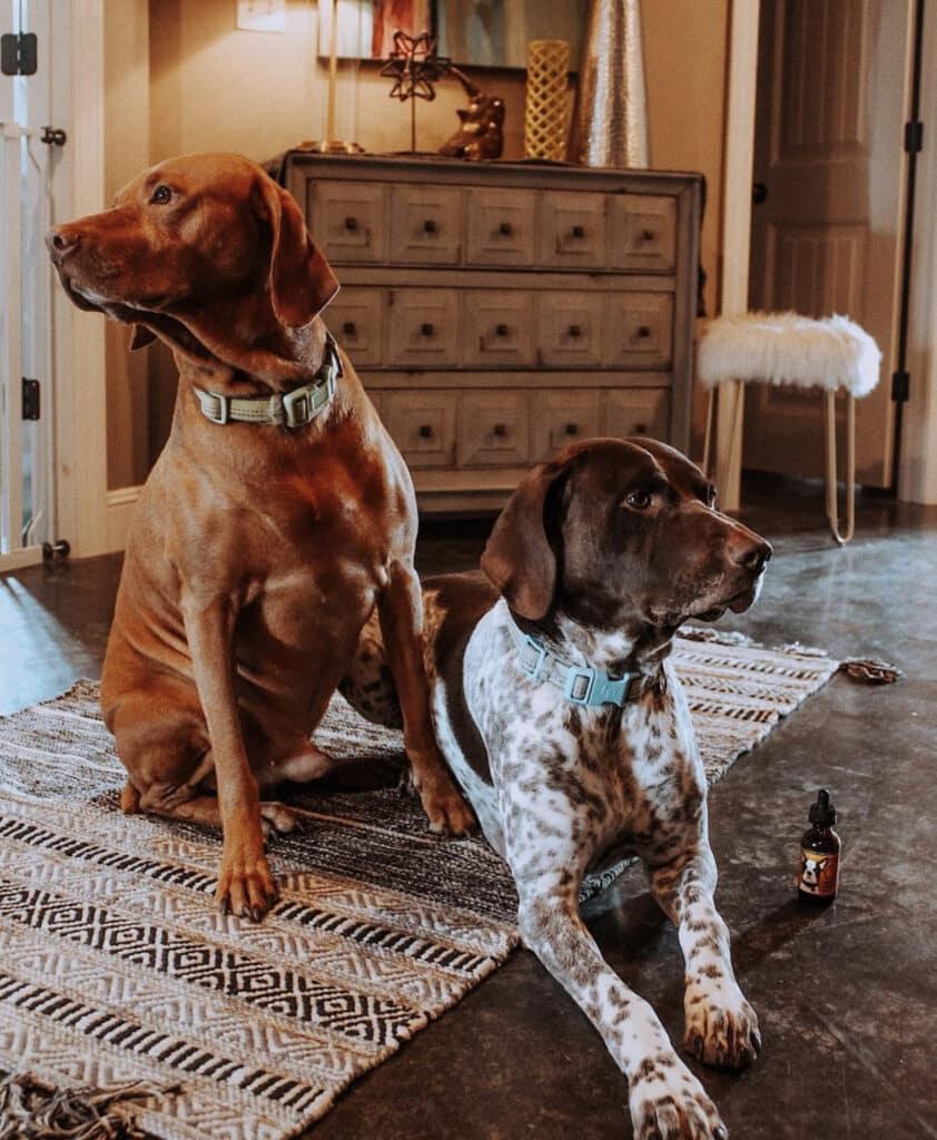 CBD Dog Health Calm CAESER Testimonial success story case study