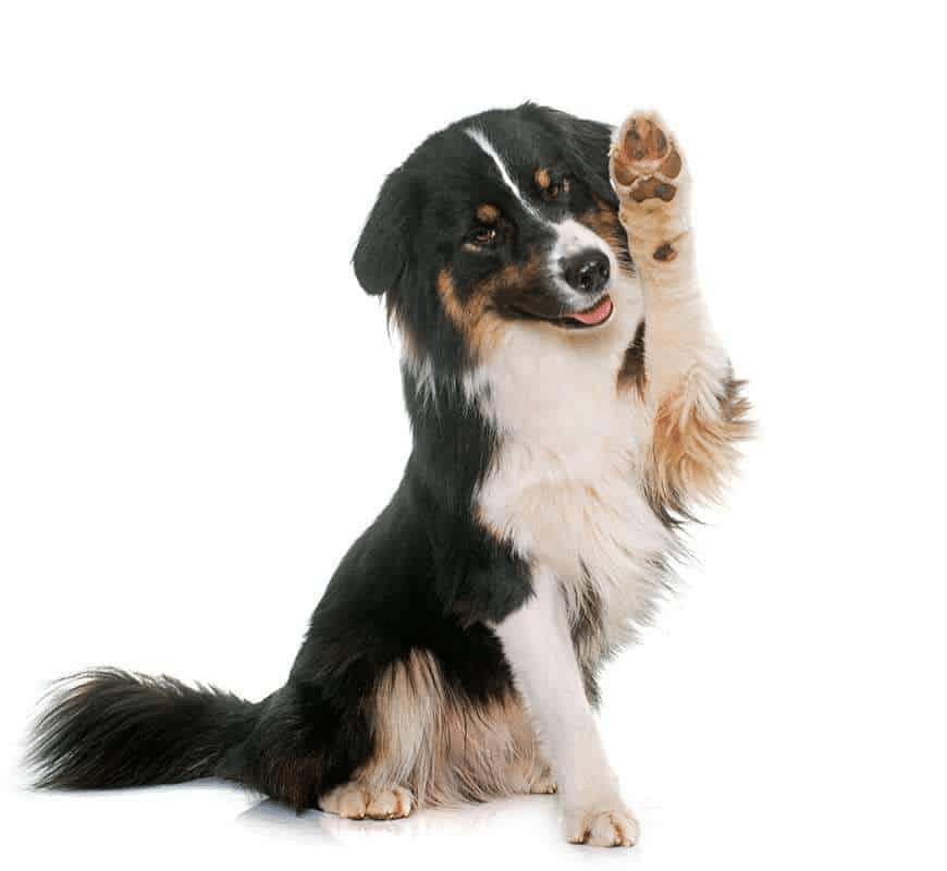 cbd-dog