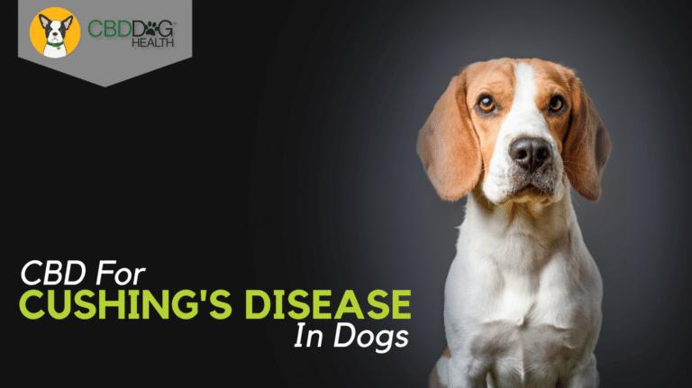 CBD For Cushing's Disease