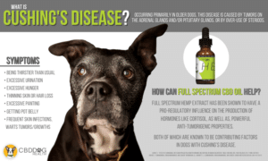 What is Cushing's Disease in Dogs?