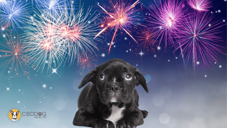 CBD for firework anxiety in dogs