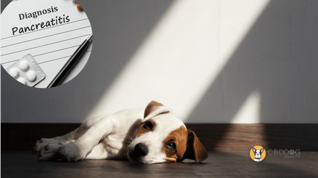 Can CBD Help A Dog With Pancreatitis
