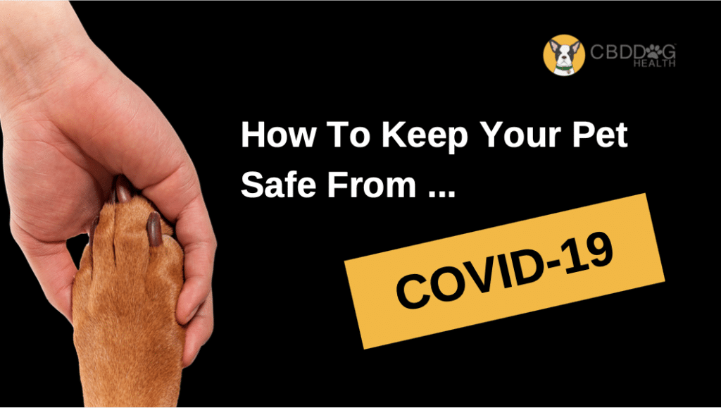 Hot to keep your pet safe from COVID 19