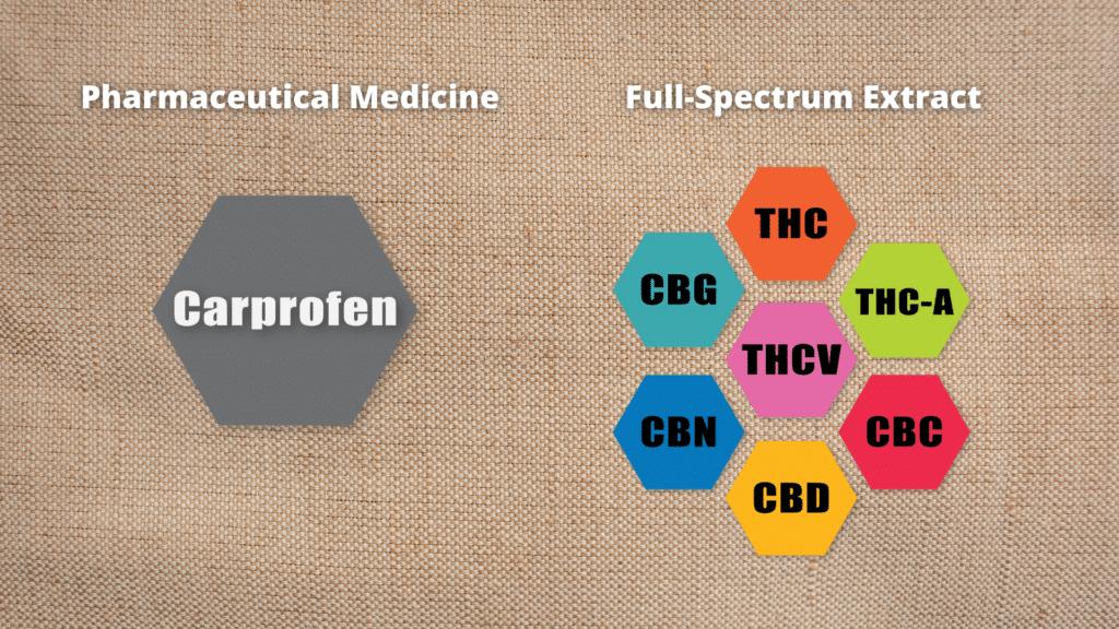 CBD dosage for dogs - molecules
