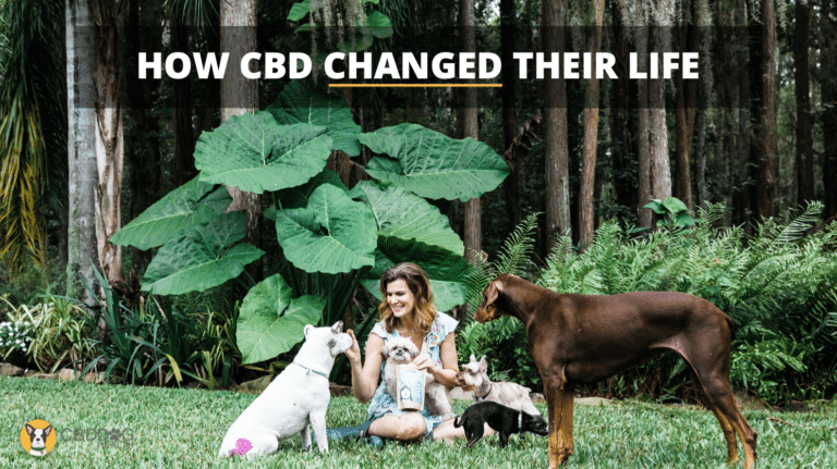 How CBD Changed Their Life
