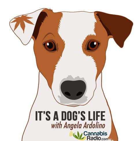 Its A Dogs Life Logo