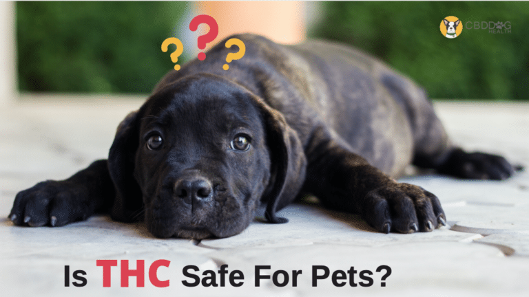 Is THC Safe For Pets