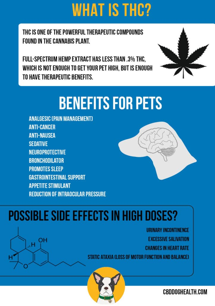 THC and PETS