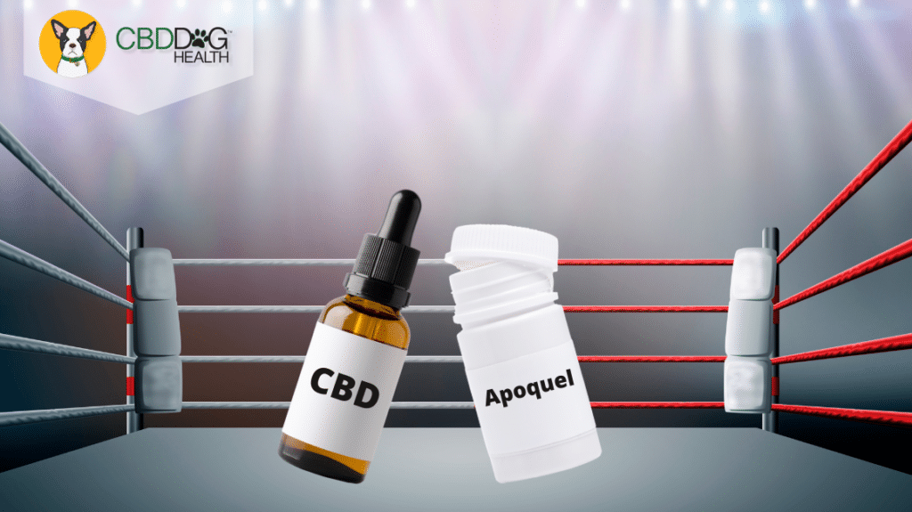 Can CBD Replace Apoquel for dogs?-2