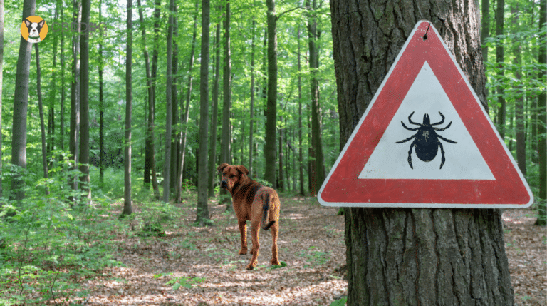 Is CBD an Effective Treatment for Lyme Disease