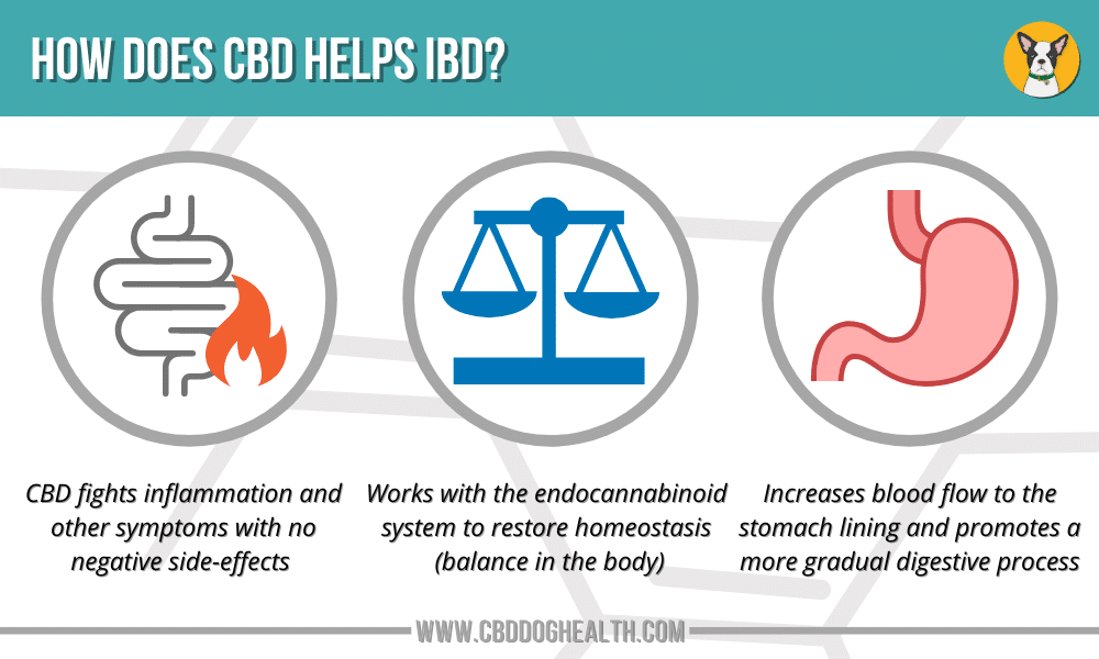How CBD Helps IBD