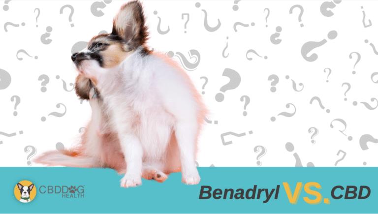 CBD vs Benadryl for dog allergies
