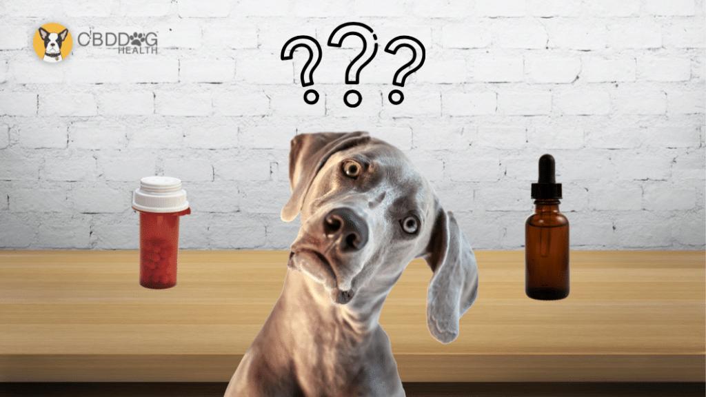 Dog Seizures CBD vs. Phenobarbital