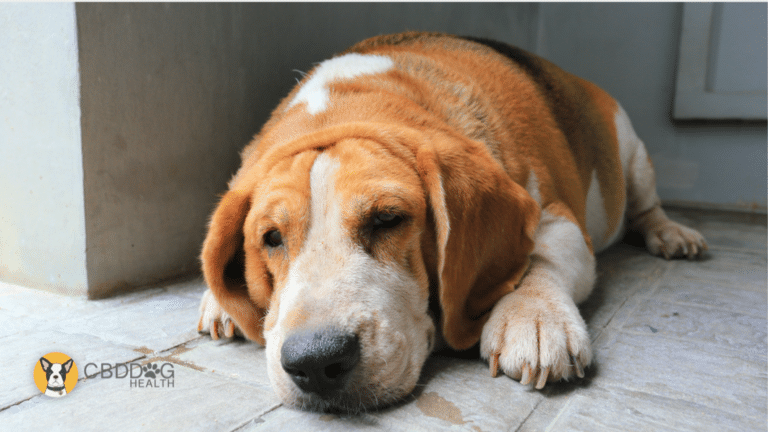Is Obesity Connected To Canine Cancer