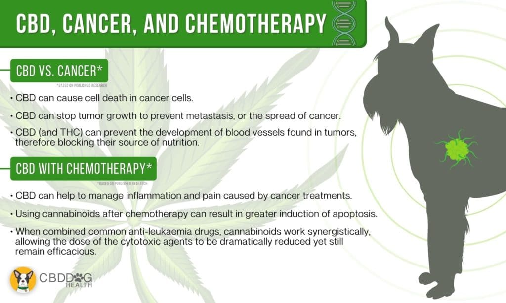 CBD and Chemo