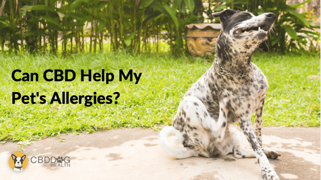 Can CBD Help With My Pets Allergies