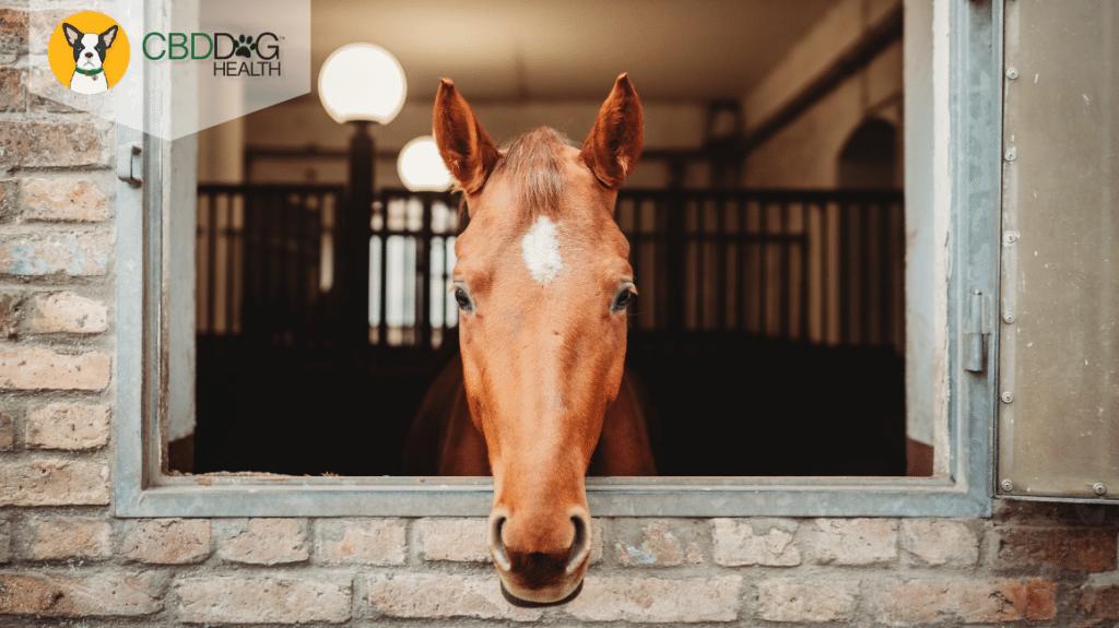 CBD For Colic in Horses