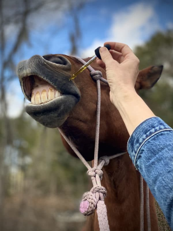 Horse Administering 1