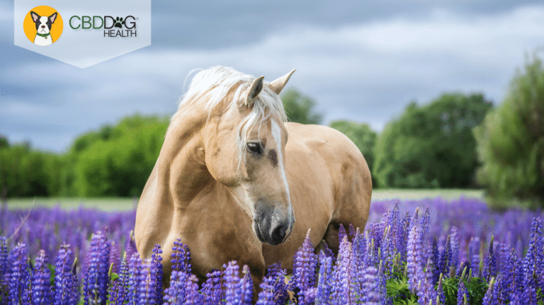 CBD For Anxiety In Horses