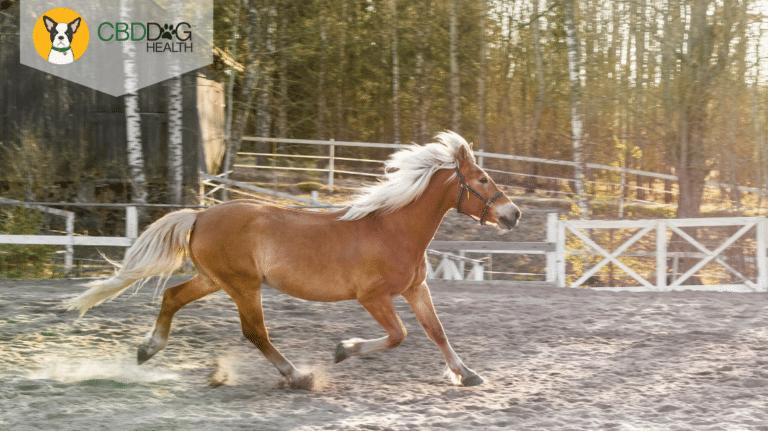 CBD For Arthritis in Horses