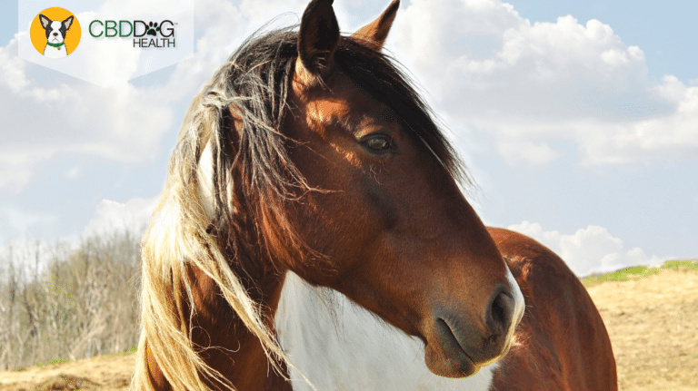 CBD For Horses - Does it work?