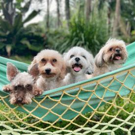 Dogs on hammock