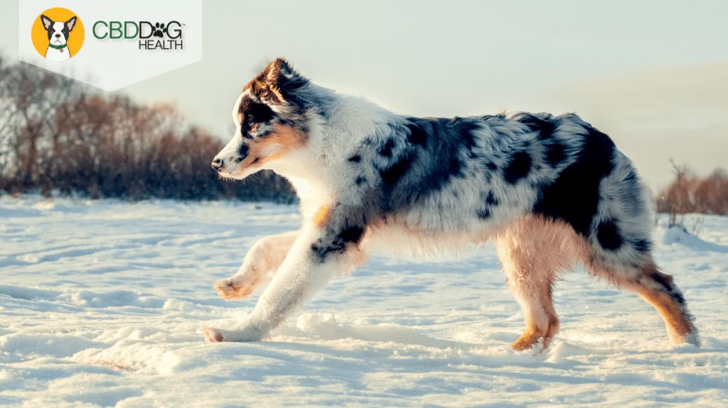 Winter Puppy Prep
