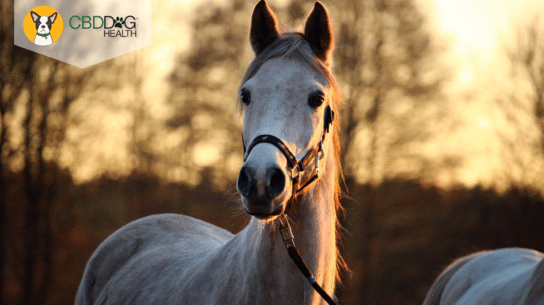 Is CBD Safe For Horses?