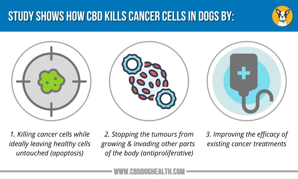 Cancer Study Shows