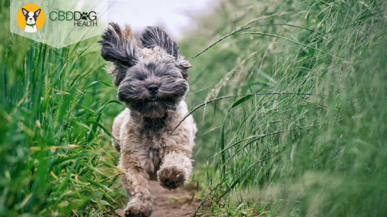 Natural Pain Relief For Dogs and Cats - CBD for pain