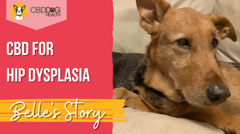Belle's Story with CBD