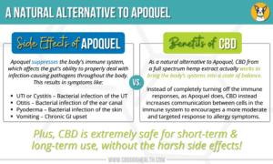Apoquel VS CBD: Natural Alternative to Apoquel