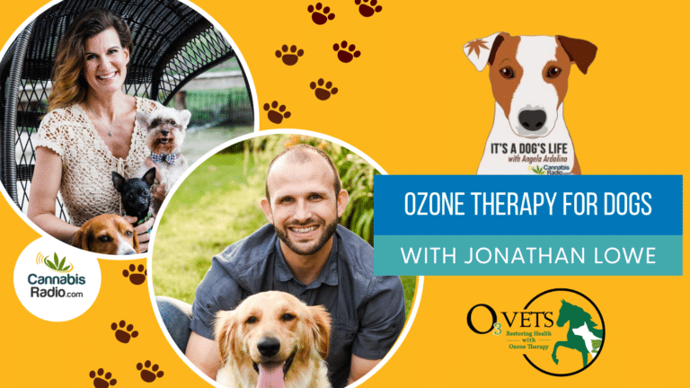 Ozone Therapy for Dogs with Jonathan Lowe