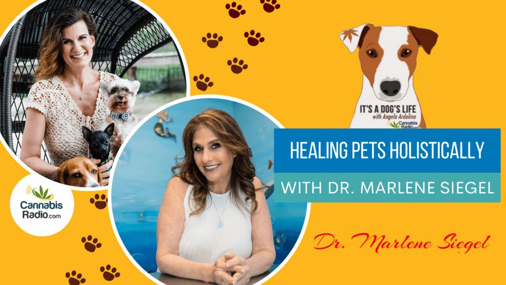 Healing Pets Holistically with Dr. Marlene Siegel