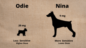 CBD Dosage for dogs - Nina and Odie