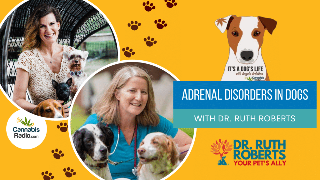 Adrenal Disorders in Dogs with Dr. Ruth Roberts - It's a Dog's Life Podcast with Angela Ardolino
