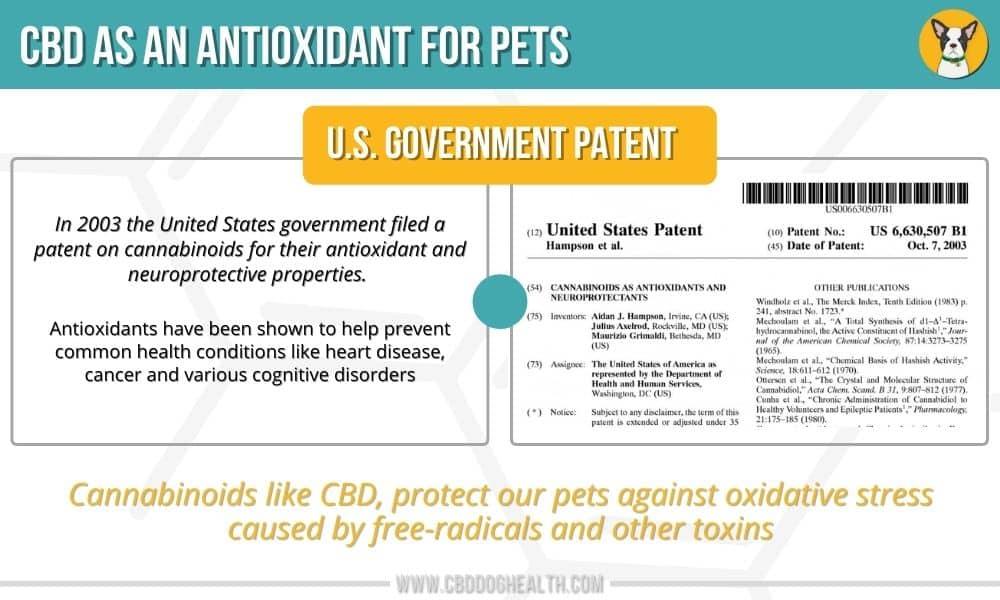 CBD As An Antioxidant for Pets