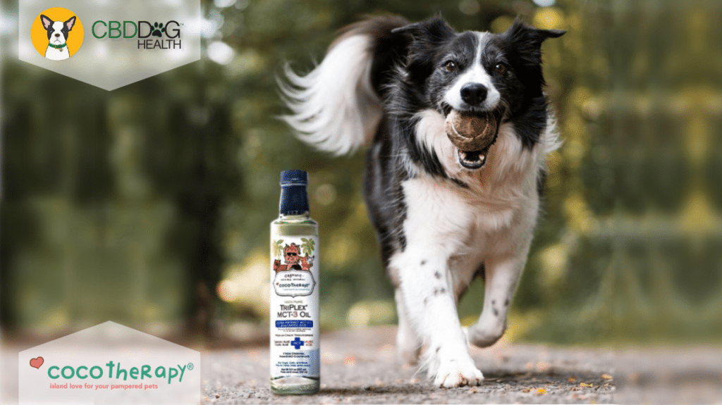 Cocotherapy MCT Oil and Dog - Featured Image