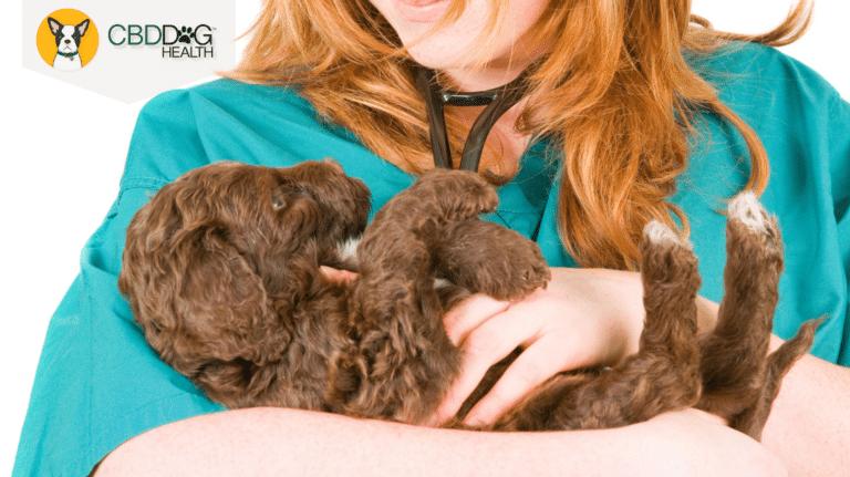 Vet Tech Appreciation Week - Featured Image for Blog - Vet Tech holds puppy